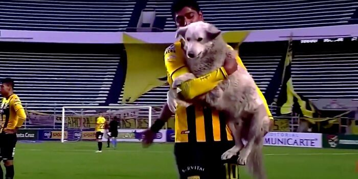 Stray dog invades pitch in Bolivia, gets adopted by a player